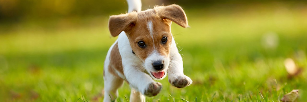 The-Complete-Guide-to-Raising-a-Puppy