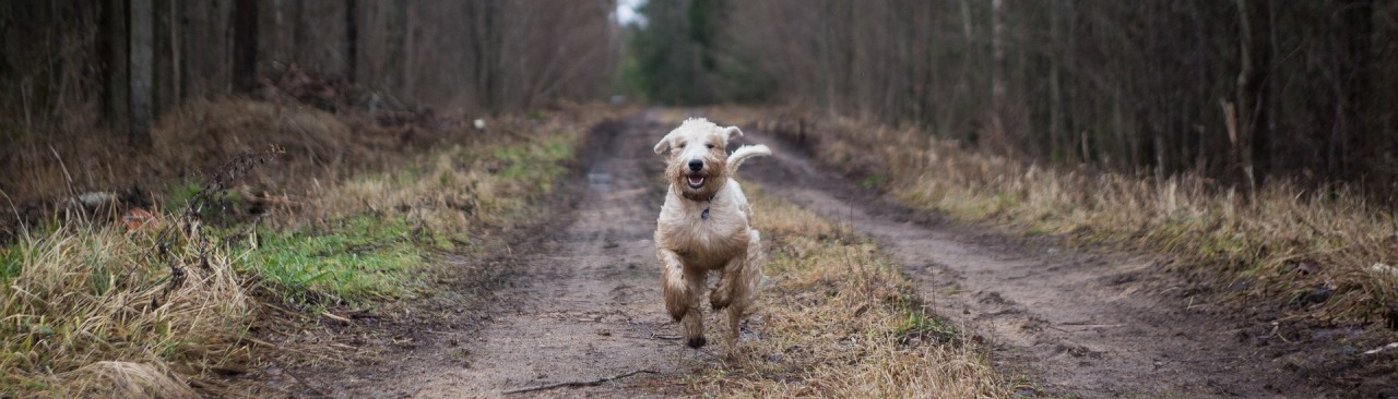 How to find a dog walker?